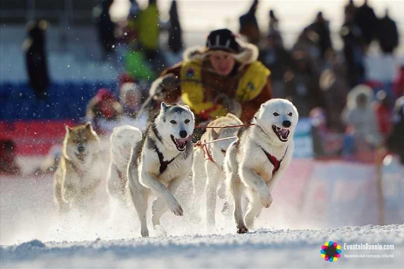Традиционная камчатская гонка на собачьих упряжках «Елизовский спринт «Берингия»