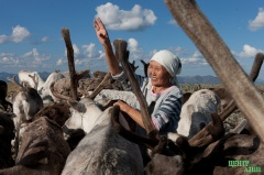 Народ тувинцев-тоджинцев продолжает борьбу за свои исконные земли